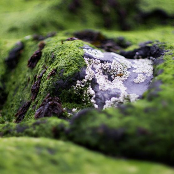 Beauté Royale Thalasso Zee-algen Gel Pakking